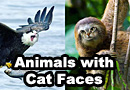 Animals with Cat Faces