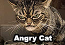 Angry Cat is the New Grumpy Cat