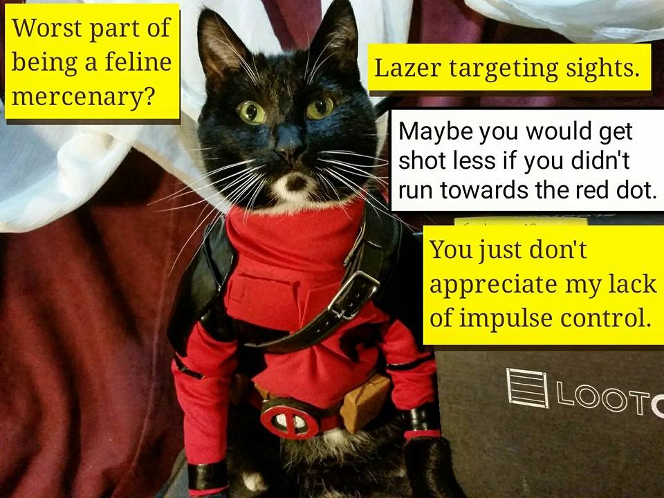 Deadpool Cat Cosplay