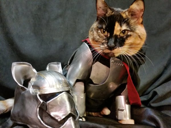 Captain Phasma Cat Cosplay